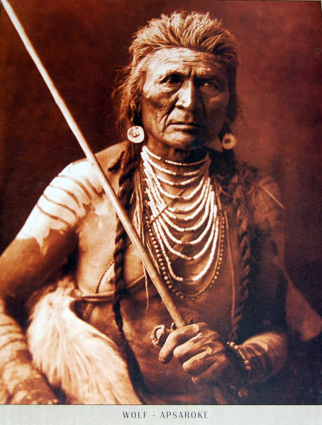 16 x 20 Poster Wolf - Apsaroke. Photo by Edward Curtis.